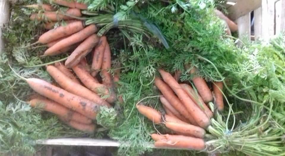 Légumes de notre producteur local